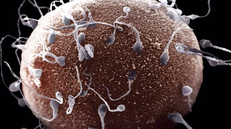 как происходит зачатие ребенка